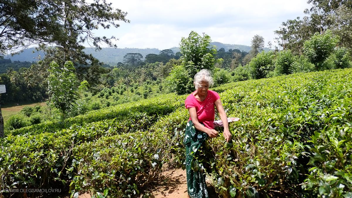 Экскурсия Канди на Шри-Ланке